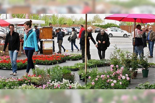 Pflanzen, Gartenobjekte und mehr