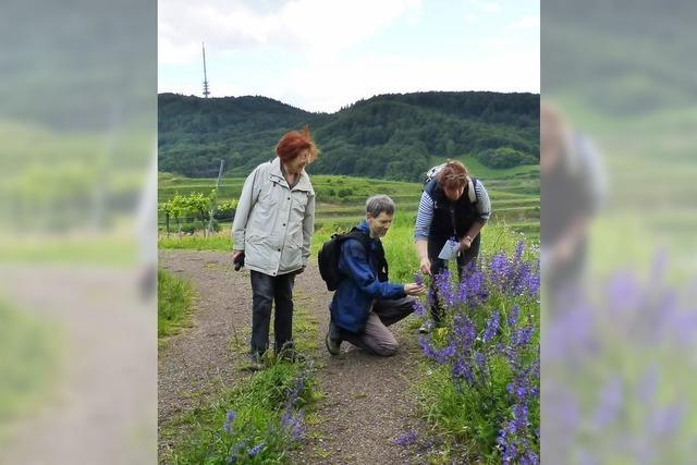 Mit Kaiserstühler Gästeführern der Natur auf der Spur