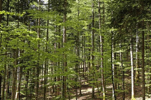 Wald bringt satten Gewinn