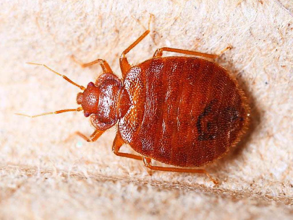 die lieben mitbewohner insekten mikroben und pilze bildung wissen badische zeitung. Black Bedroom Furniture Sets. Home Design Ideas