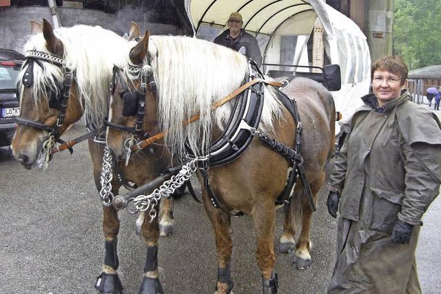 Pferde eröffnen eine andere Perspektive