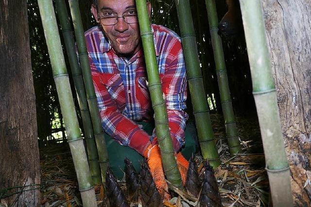 Zwölf Jahre nach der Pflanzung: Hecklinger erntet Sprossen