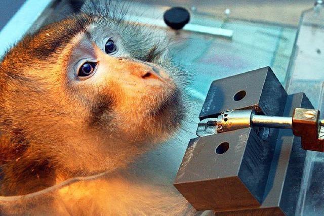 Kann die Forschung auf Affenversuche verzichten?