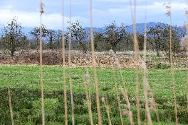 Freiburg tastet Naturschutz von Rieselfeld-West nicht an
