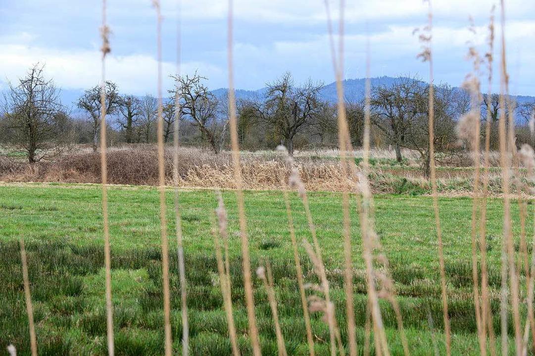 Unter Schutz: das Areal westliches Rieselfeld  | Foto: eggstein