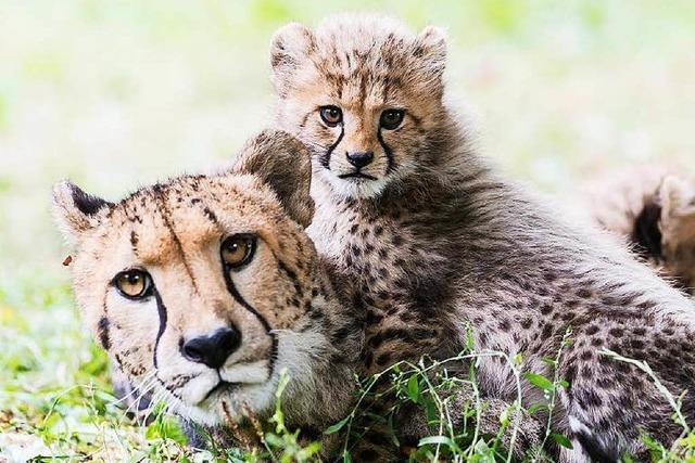 Zoo Basel braucht trotz neuem Rekordjahr weiter Drittmittel