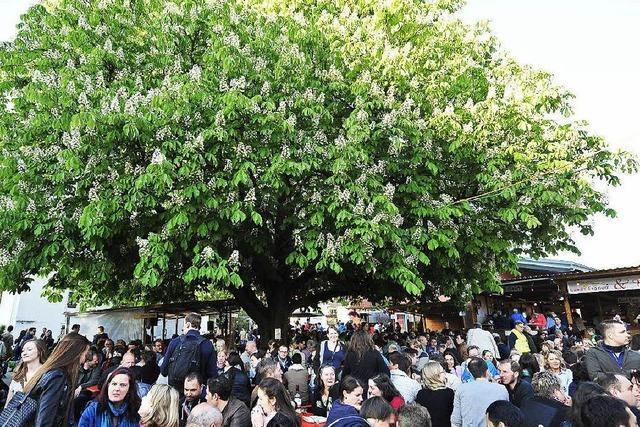 Weintage locken bis zu 50.000 Menschen nach St. Georgen
