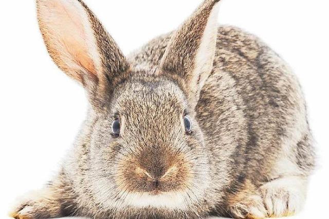Tierquäler steckt lebenden Hasen in Glascontainer