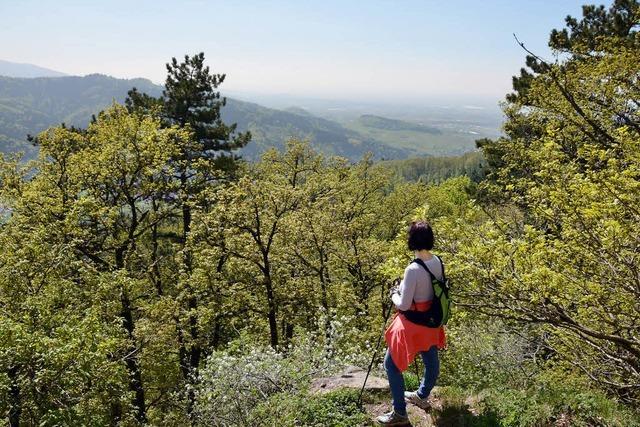 Wanderung rund um Staufen