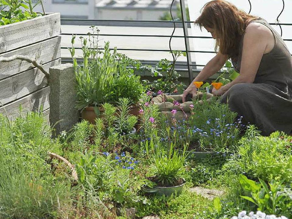 Hobbygärtnerin Christina Franz in ihrem Dachgarten im Vauban  | Foto: Falko Wehr