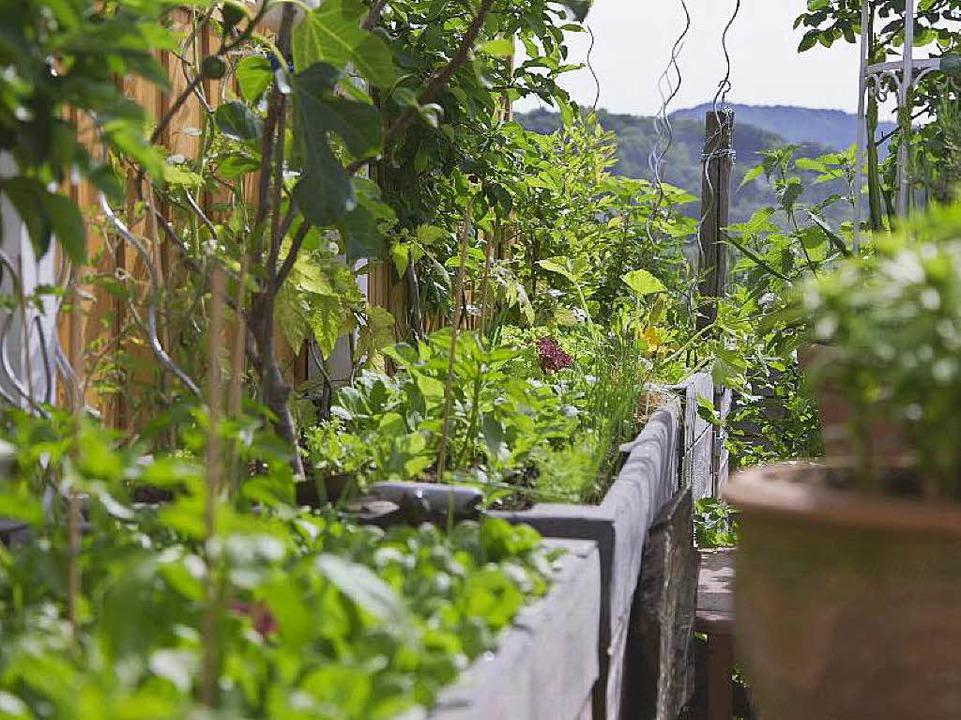 Ohne Hochbeete geht im Dachgarten nichts.  | Foto: Falko Wehr