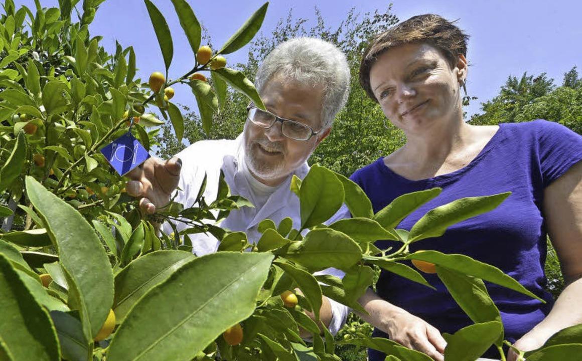 Direktor Professor  Thomas Speck und K...mquat-Strauch im Botanischen Garten.    | Foto: Regula Wolf (2)/ Michael BAmberger