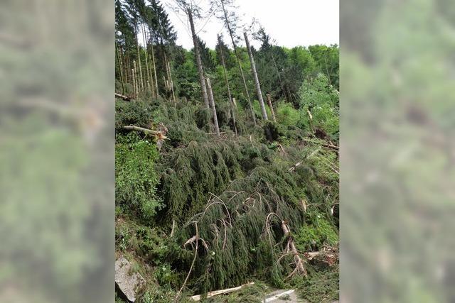 Windhose sorgt für jede Menge Kleinholz