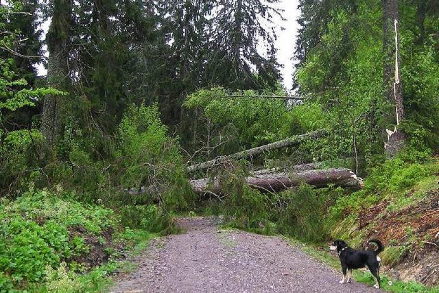 Tornado richtet zwischen Feldberg und Bärental schwere Schäden an