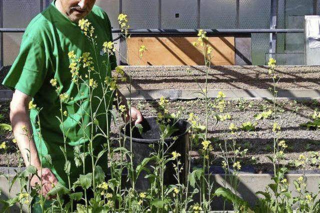 Langzeitarbeitslose gärtnern für Bedürftige in Sexau und Freiburg