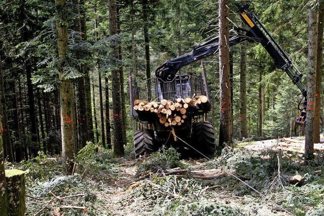 Holzhieb dient vor allem der Verkehrssicherung