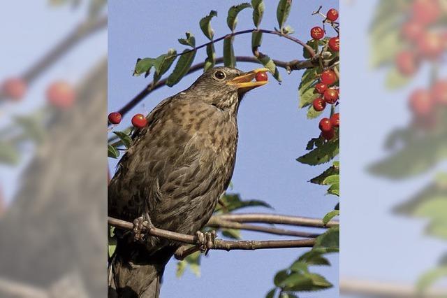 Heimische Pflanzen fördern Artenvielfalt