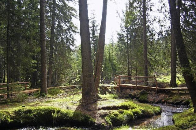 Familienwanderung im Bernauer Zauberwald