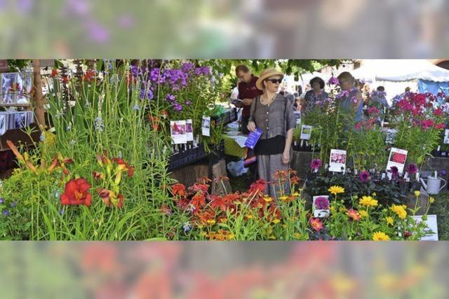 Dreiländergarten entfaltet Zauber