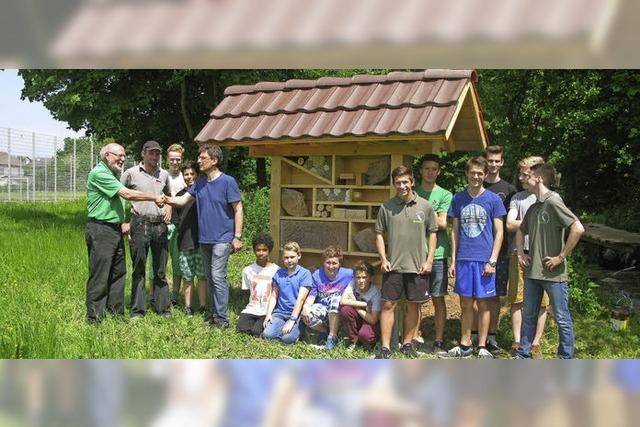Wildbienenhotel und Schwalbennester für Biotop AG