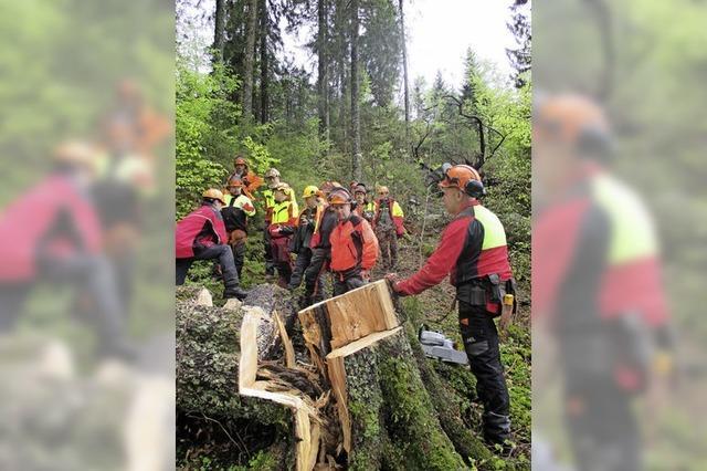 Sicheres Sägen im Sturmholz geübt