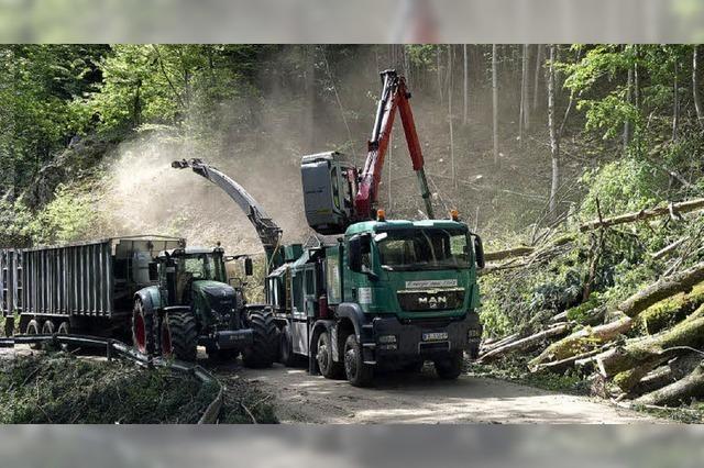 Großeinsatz für die Forstwirtschaft auf der gesperrten Sirnitzstraße