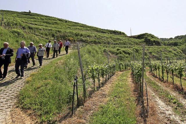 Bessere Bedingungen für den Weinbau