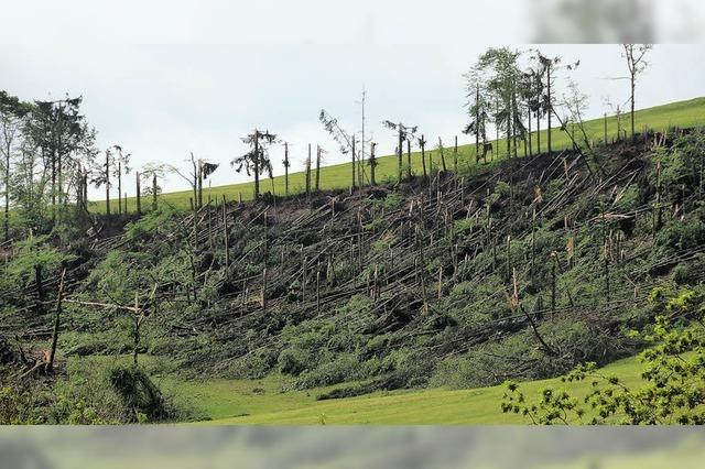 Stürmische Zeit für Waldbesitzer