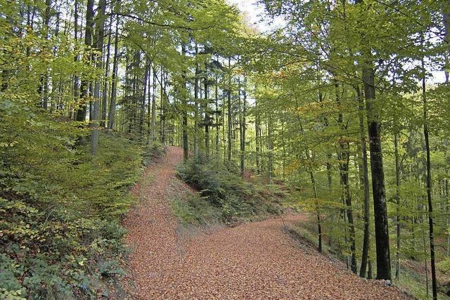 Wald ist in gutem Zustand