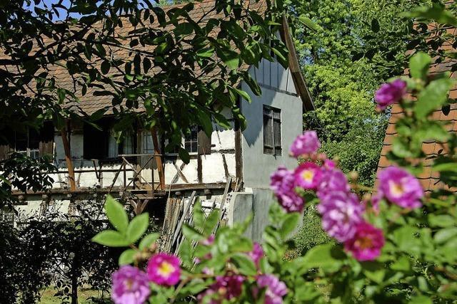Blütenpracht im Altweiler Schlössli