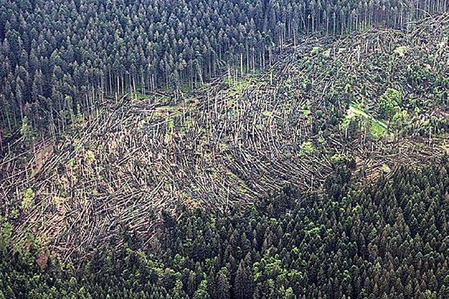 BADISCHE-ZEITUNG.DE: Tornado-schneise