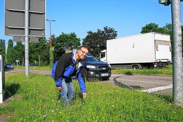 Emmendingen lässt's sprießen: Die Stadt verzichtet aufs Mähen