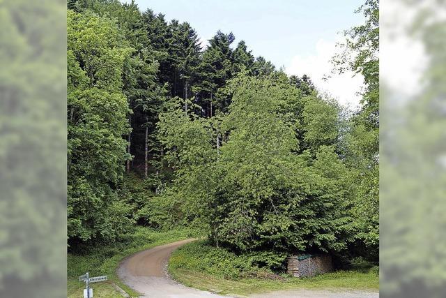 Gemeinde verdient gutes Geld mit Wald