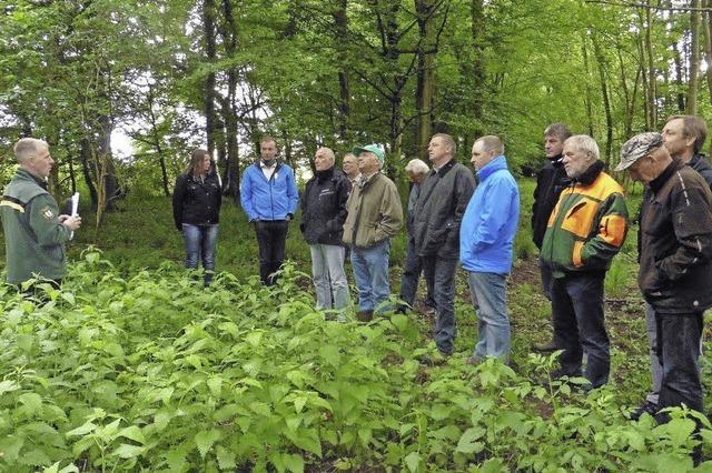 Wald hat zunehmend soziale Funktion