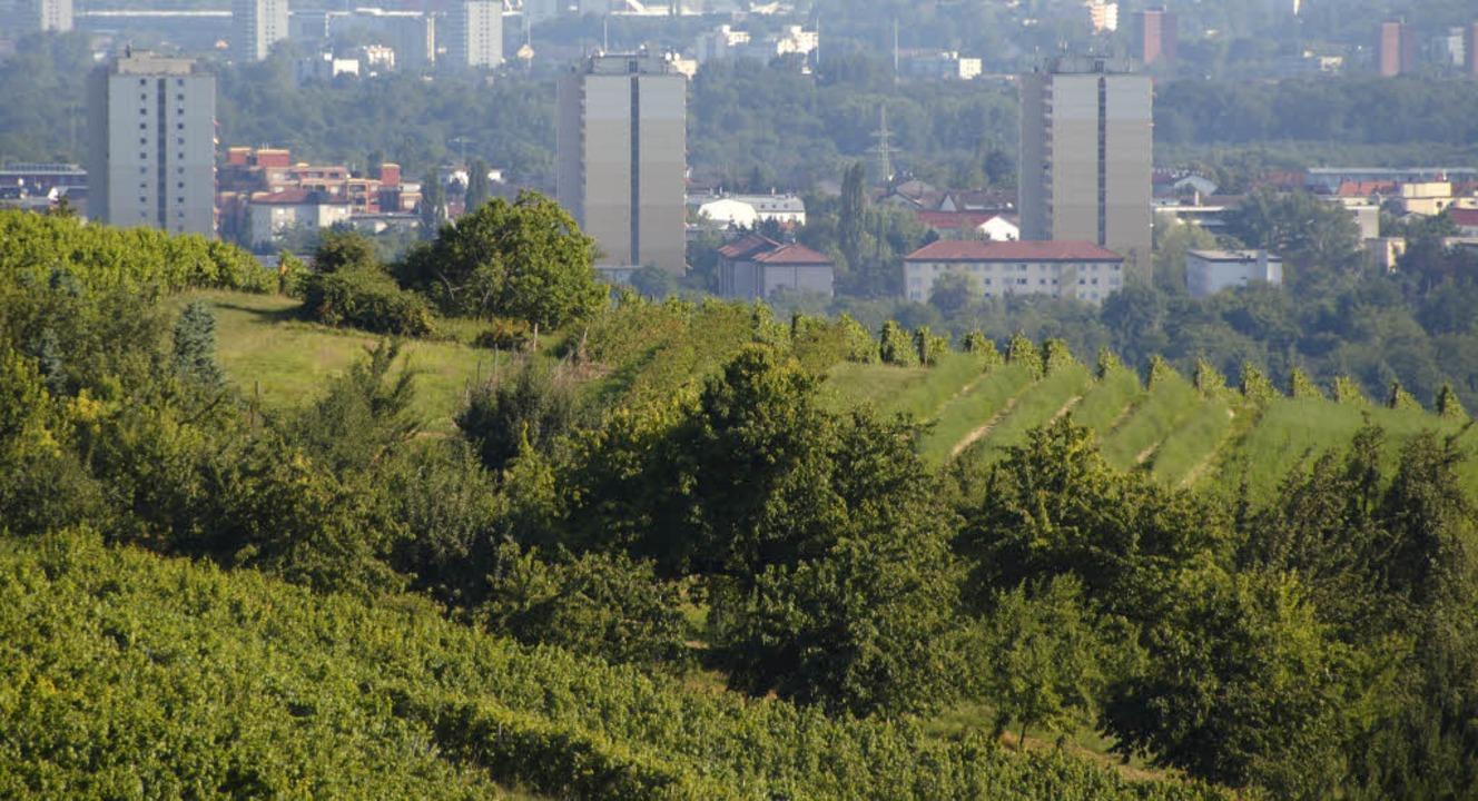 Am Tüllinger Berg ist bereits einiges ...erbunds  Markgräflerland verwirklicht.  | Foto: Herbert Frey