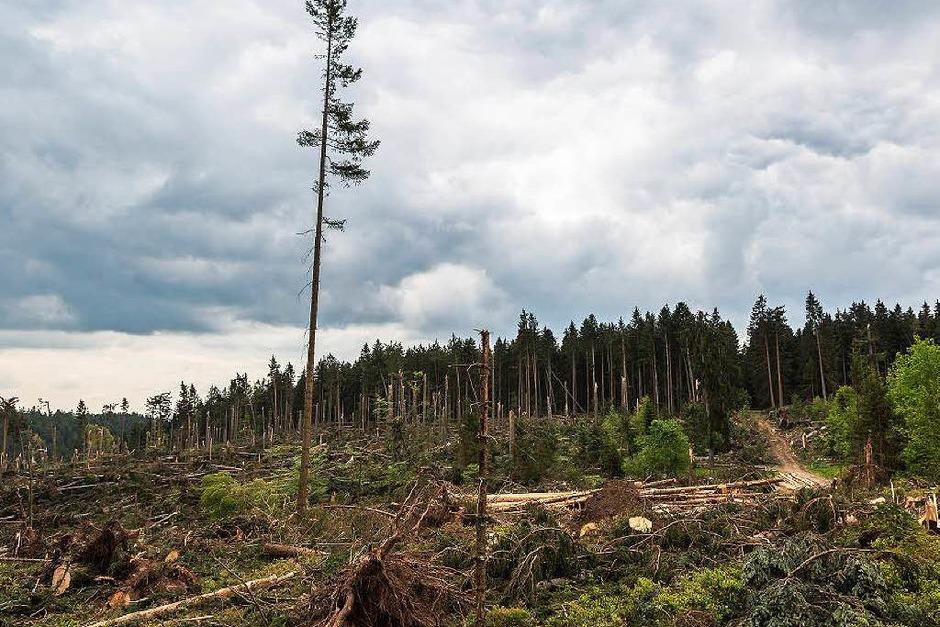 Bei Bonndorf hat der Tornado am 13. Mai 2015 seine gewaltigen Spuren im Wald hinterlassen. (Foto: Carlotta Huber)