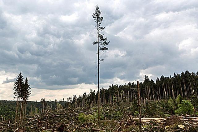 BADISCHE-ZEITUNG.DE: Tornadoschneise