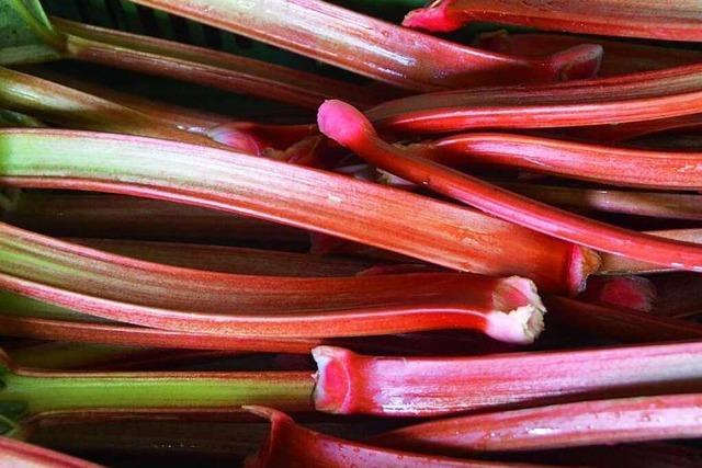 Rhabarber: Saures Gemüse mit heilender Wirkung