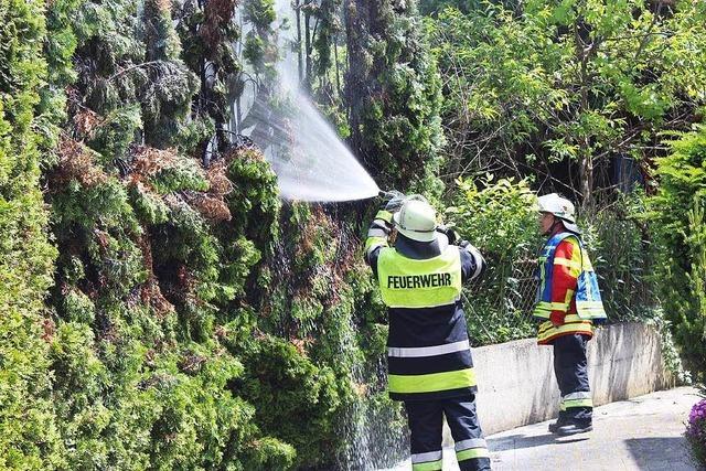 Gasbrenner setzt Hecke in Brand
