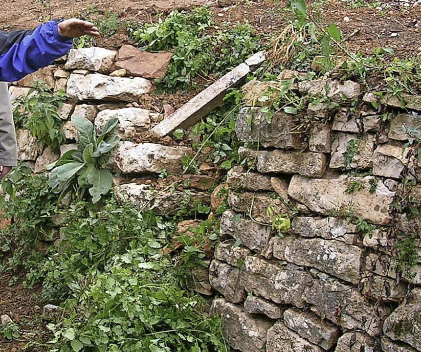 Biotope: Natursteinmauern   | Foto: Michaelis
