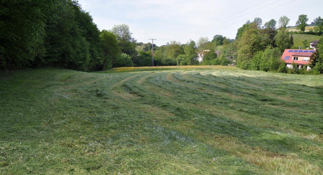 Ob auf dieser grünen Wiese ein Regenrü... entstehen soll, wird weiter geprüft.     Foto: Steckmeister
