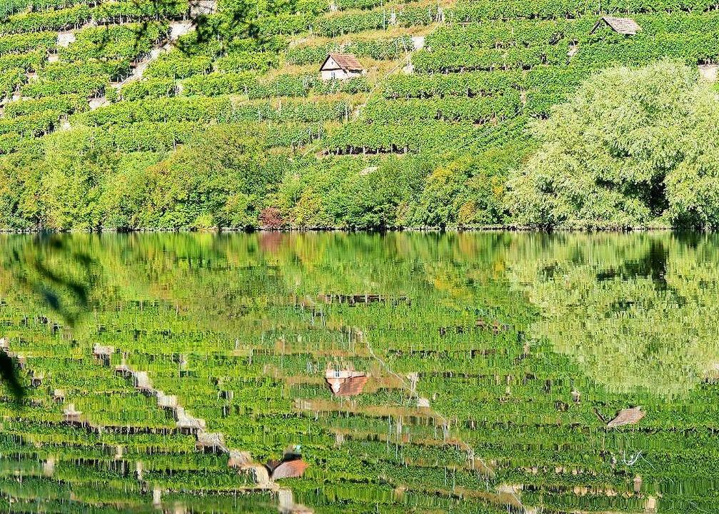 So grün ist Stuttgart: Weinberge spiegeln sich im Neckar     Foto: DPA