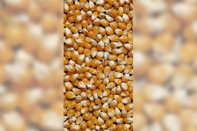 Maissirup aus den USA - ein Dickmacher macht sich breit