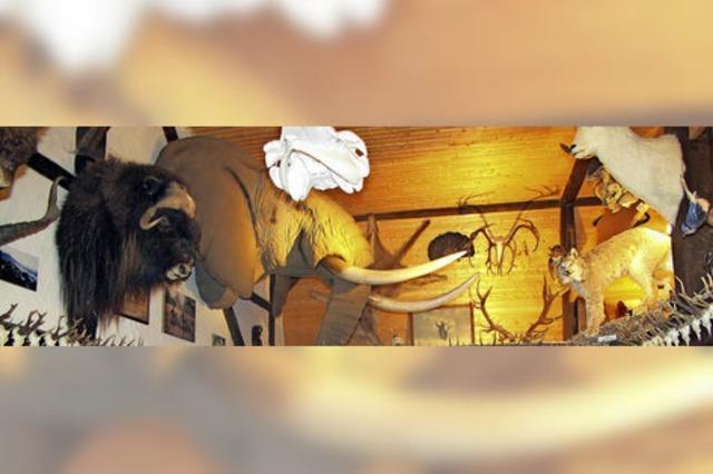 Das Naturkundemuseum in Bonndorf-Holzschlag ist geöffnet