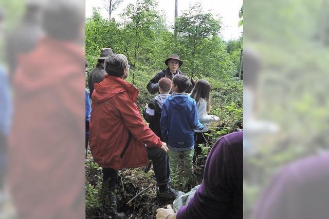 Im Bann des Bannwalds