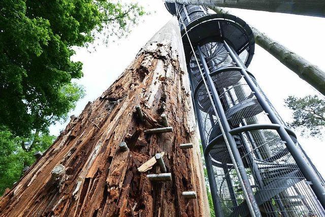 Stahl oder Holz: Der Streit um den Schlossbergturm