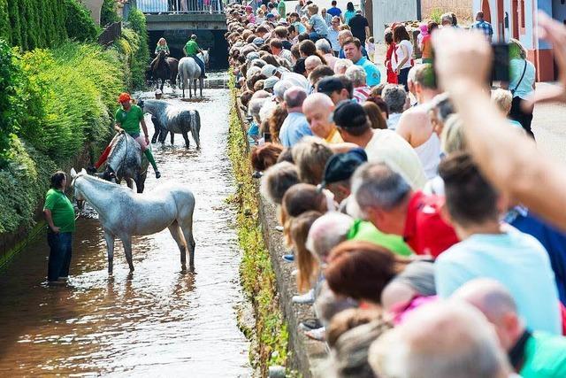 Ein Wellnessprogramm für die Pferde