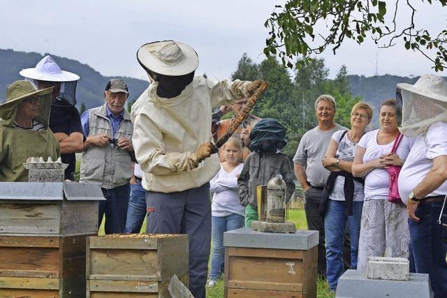 Die Bienen bleiben ganz friedlich