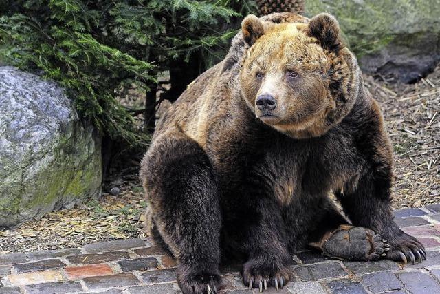 Joschi, der Mundenhof-Bär, ist tot