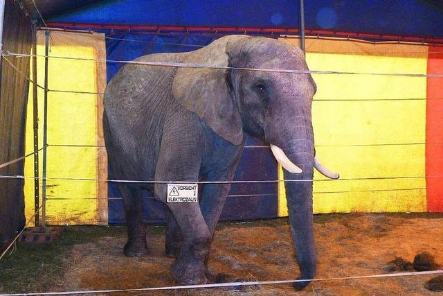 Elefant tötet Spaziergänger im Odenwald